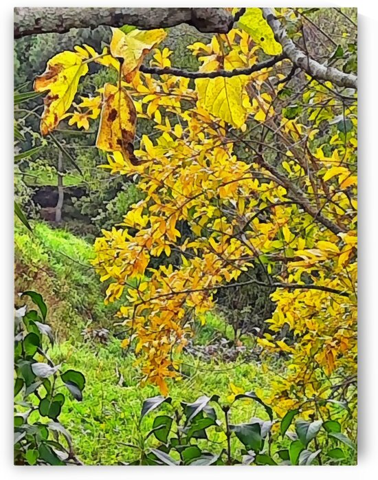 Fig Tree and Pomengranate In Autumn by Dorothy Berry-Lound