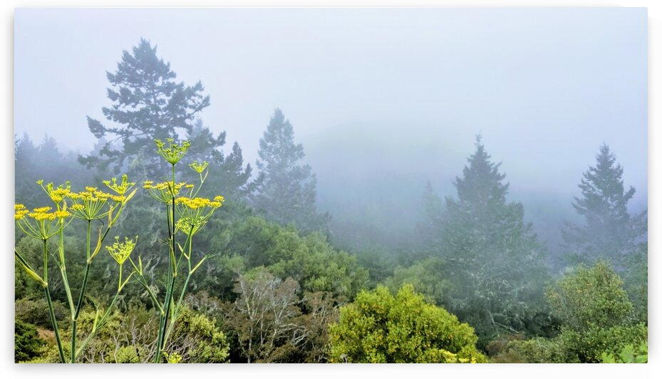 Foggy Mountaintop by LARose Photographs