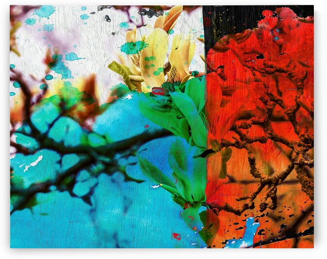 Magnoliaabstractphotography_8x10 by Connie Schofield Art