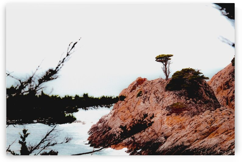 isolated tree with ocean view at Big Sur Highway1 California USA by TimmyLA