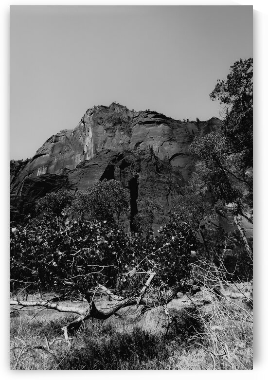 mountain in the forest at Zion national park Utah USA in black and white by TimmyLA