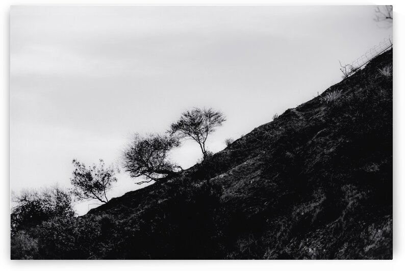 tree on the mountain at California USA in black and white by TimmyLA