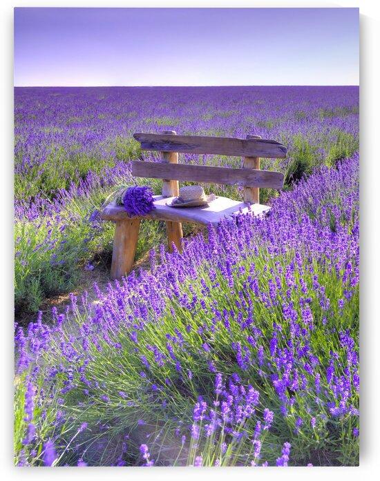 Bench in Lavender field by Assaf Frank