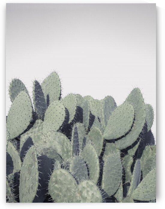 Cacti by Assaf Frank