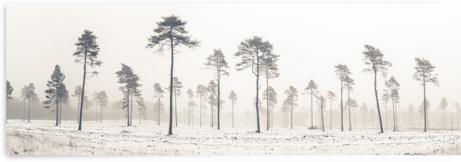 Snowy forest in winter by Assaf Frank