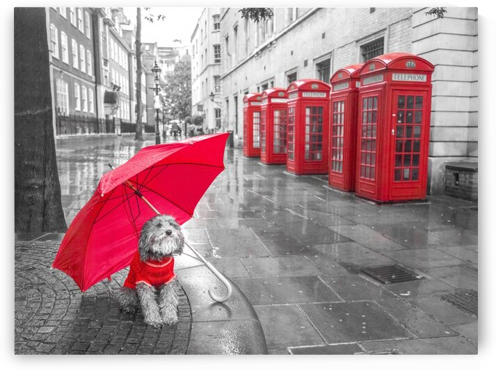 Dog with umbrella on London city street by Assaf Frank