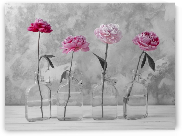 Peonies in glass bottles by Assaf Frank