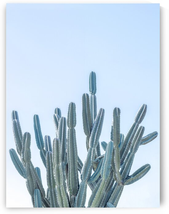 Cactus by Assaf Frank