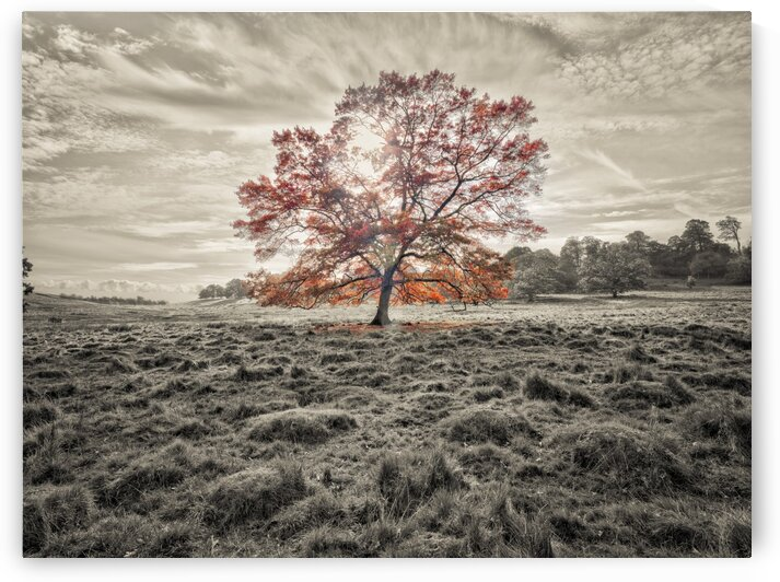 Single tree at autumn by Assaf Frank