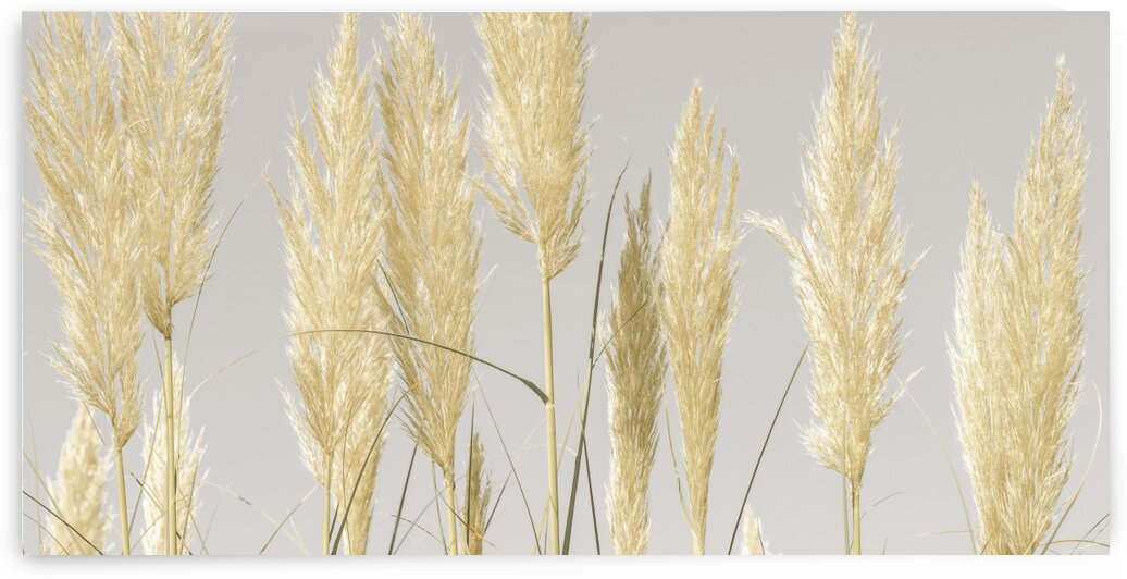 Feather Reeds by Assaf Frank