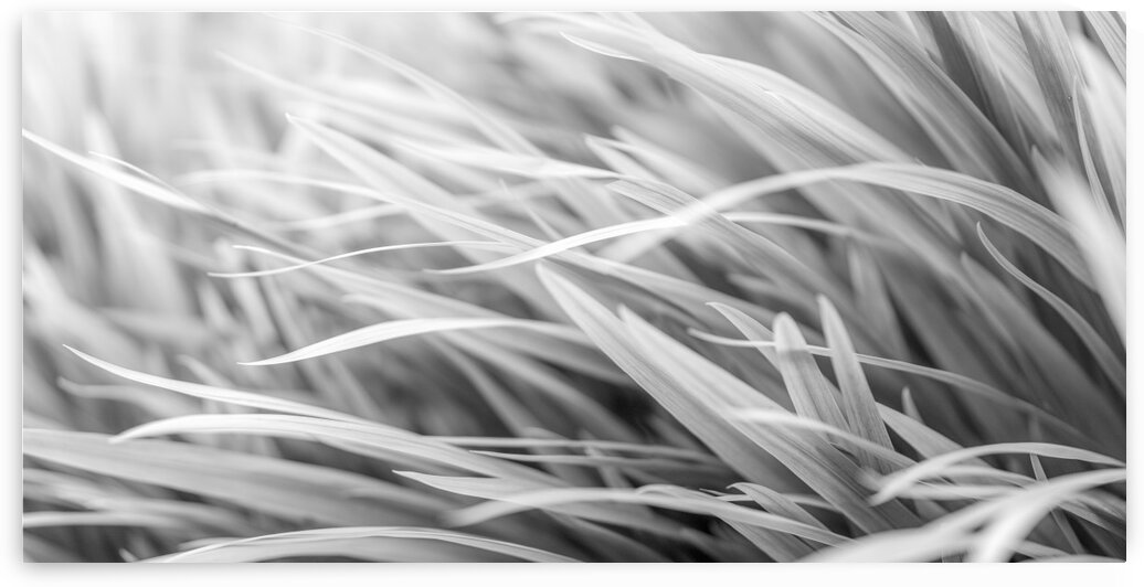 Flowing Grass by Assaf Frank
