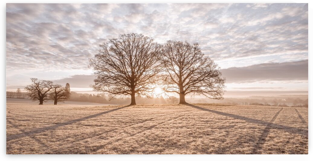 Trees in meadow by Assaf Frank