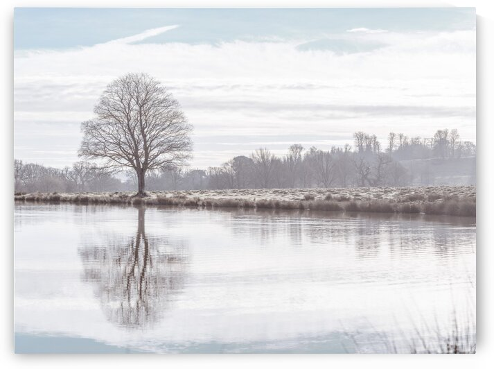 Reflection of a tree by Assaf Frank