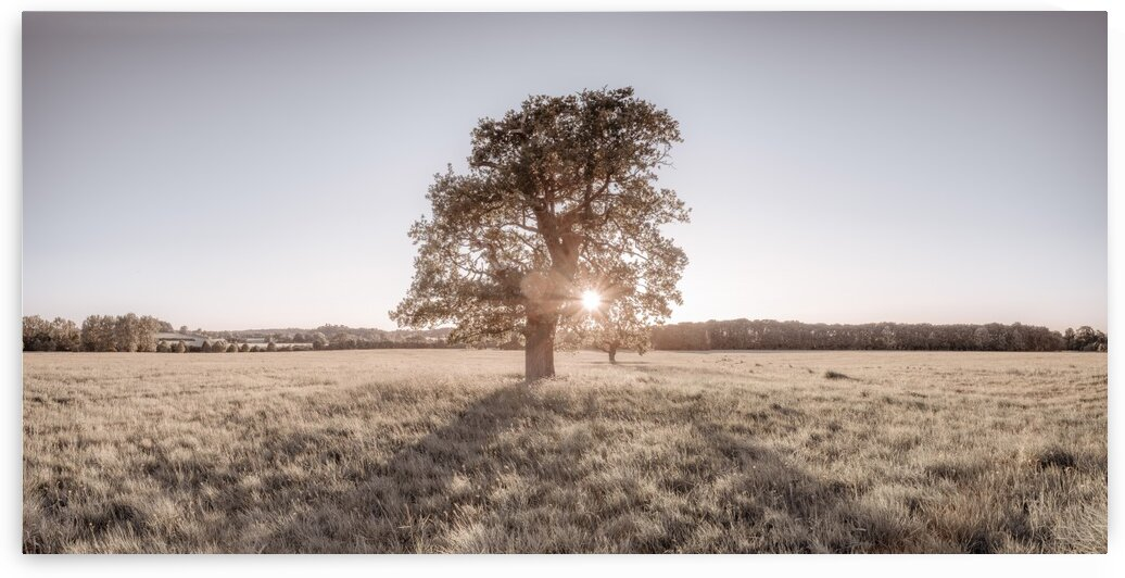 Sun shining through single tree by Assaf Frank