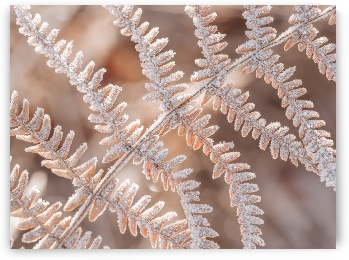 Frost on plant by Assaf Frank