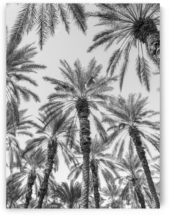 Palm Trees by Assaf Frank