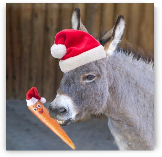 Donkey with Santa hat by Assaf Frank
