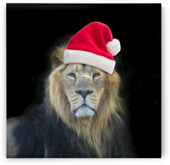 Lion with Santa hat by Assaf Frank