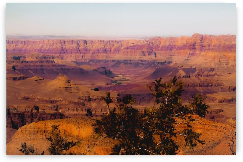 Desert in summer at Grand Canyon national park USA by TimmyLA