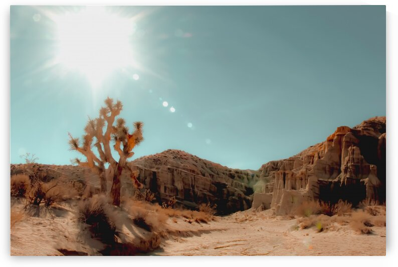 Desert and cactus with summer sunlight at Red Rock Canyon State Park California USA by TimmyLA