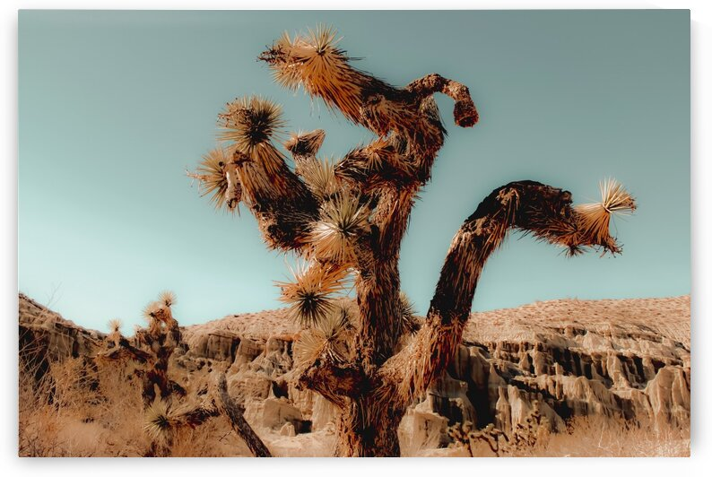 Cactus and desert at Red Rock Canyon State Park California USA by TimmyLA