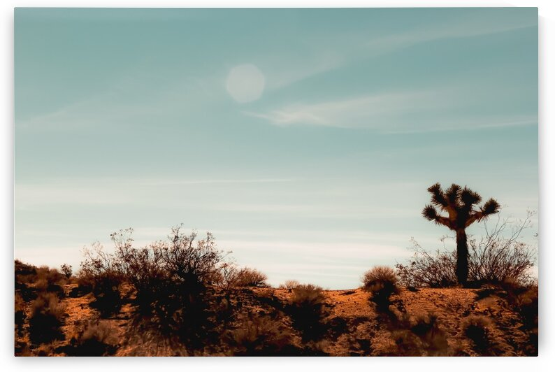 Cactus and desert view at Red Rock Canyon State Park California USA by TimmyLA