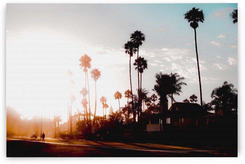 sunset sky in summer with palm tree view in California USA by TimmyLA