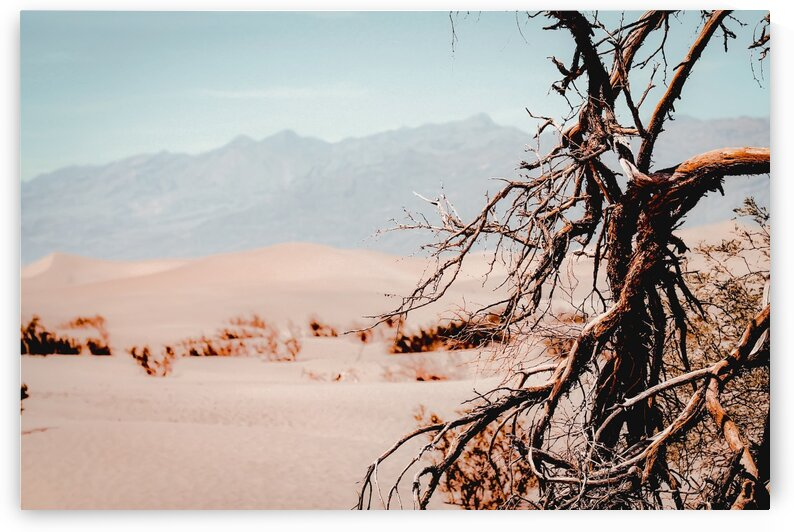 Tree branch with sand desert and mountain view at Death Valley national park California USA by TimmyLA