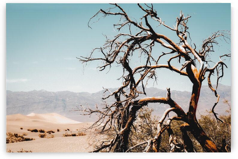 Tree branch in the sand desert and mountain view at Death Valley national park California USA by TimmyLA