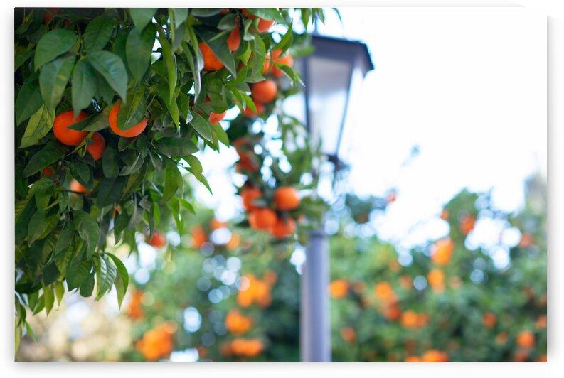 Orange tree IV by Aquamarine