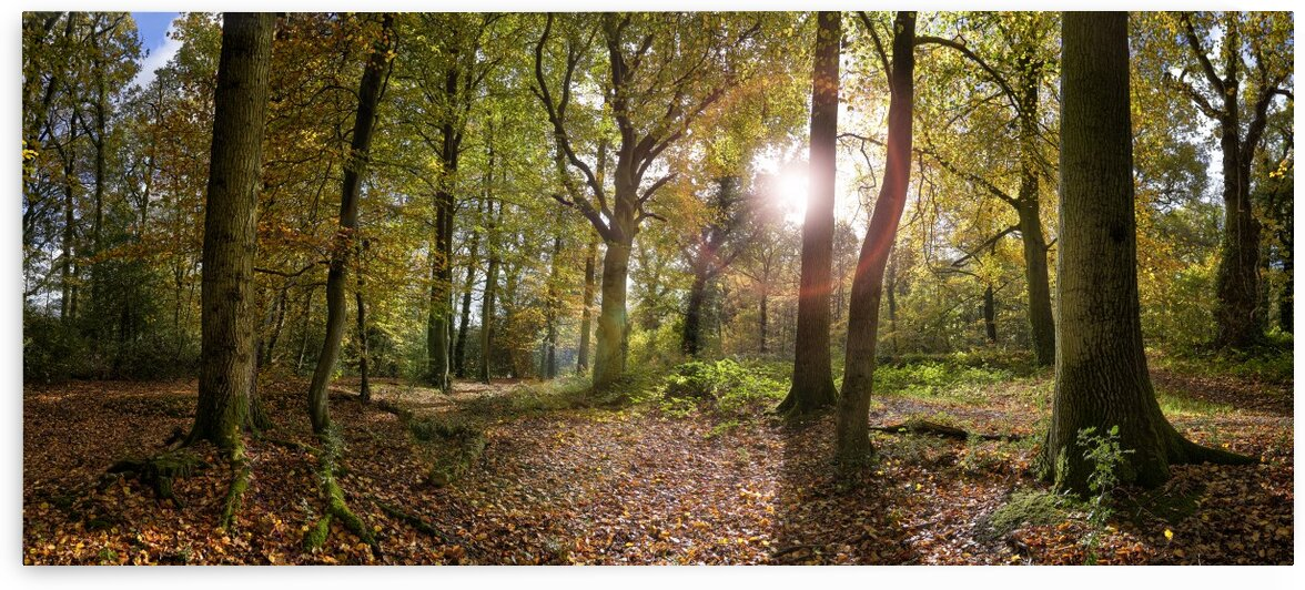 Autumn Forest by Adrian Brockwell