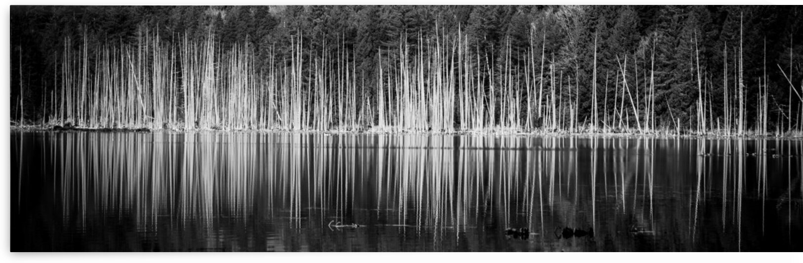 The Silent Sound of Trees by bj clayden photography