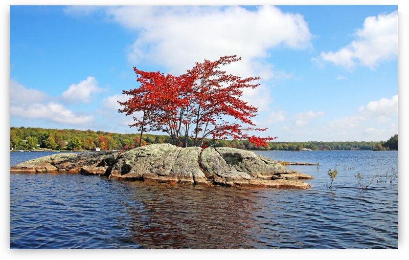 Red Maple Island I by Deb Oppermann