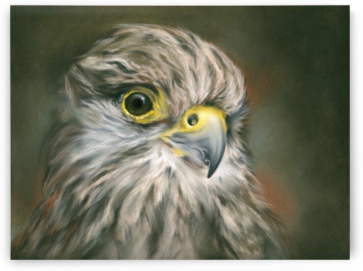 Kestrel Falcon Bird Portrait by MM Anderson