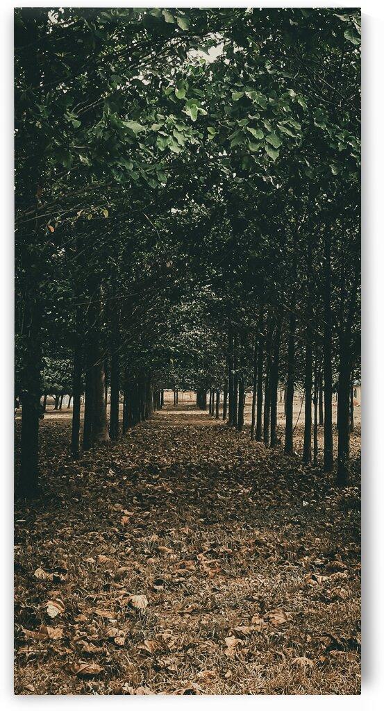 Tree Path by Nowe Uzamere