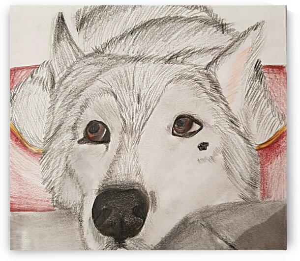 Siberian Husky Portrait  by RJF