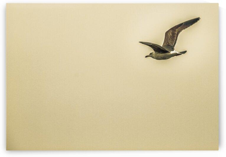Freedom by Ysae Art Photography