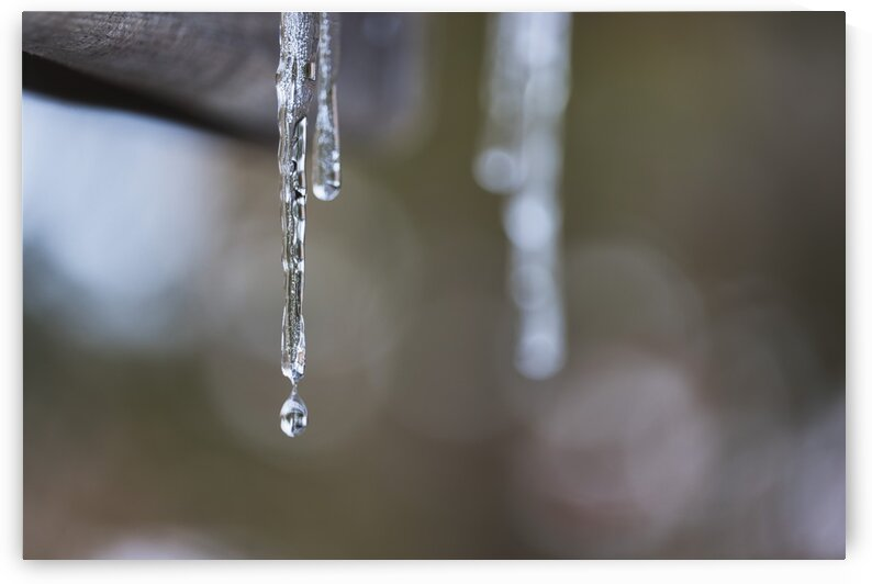 Melting icicles by SV Mind  Art Photography
