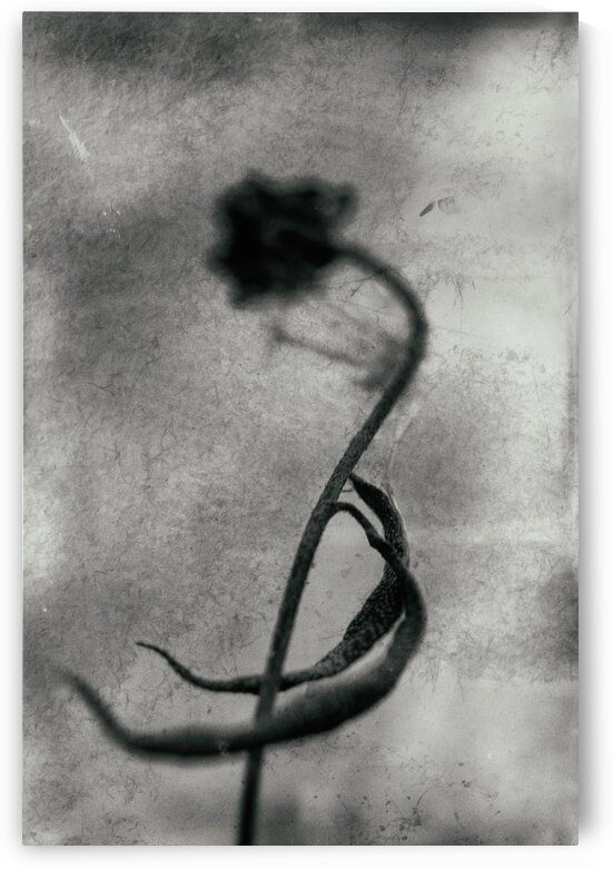 Automnejf 18  by Jean-Francois Dupuis