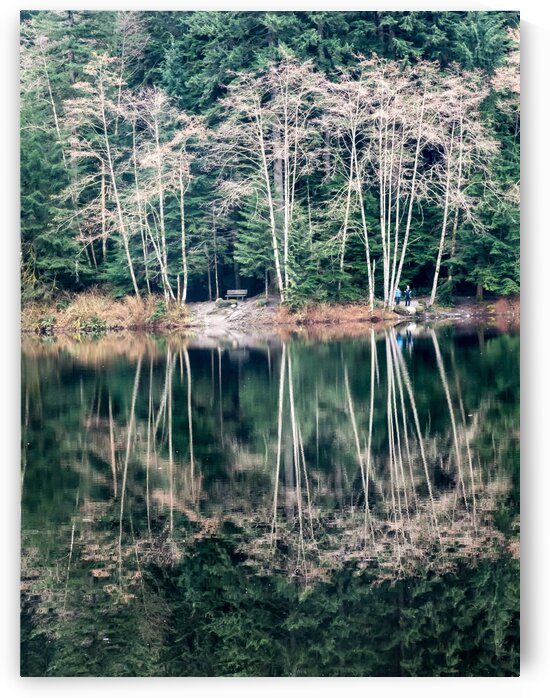 White Trees Reflected In Still Lake by bj clayden photography