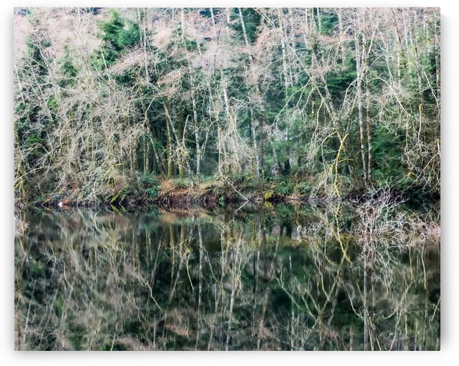 Forest Reflection by bj clayden photography