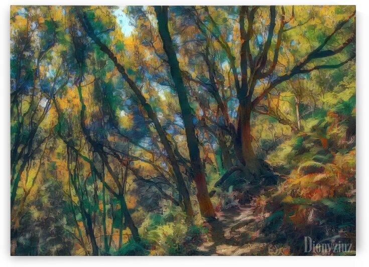 Forrest hike by Dionyziuz