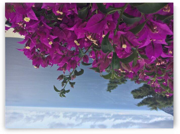 Bougainvillea along Amalfi Coast by Greg Brzozowski