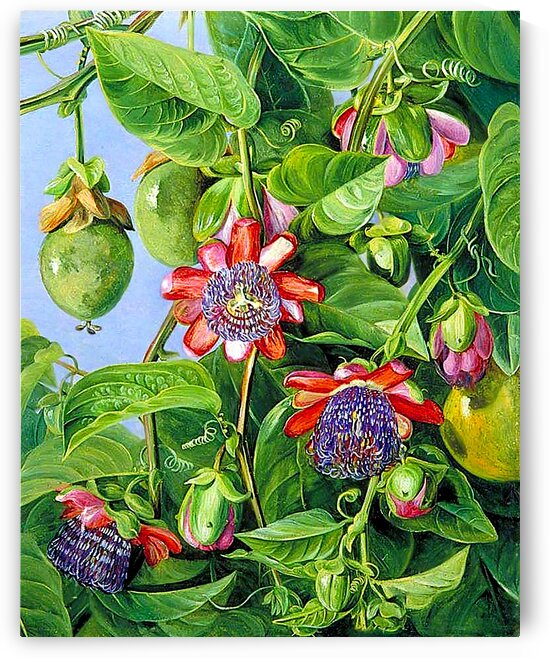 Flowers And Fruit Of The Maricojas_OSG by One Simple Gallery