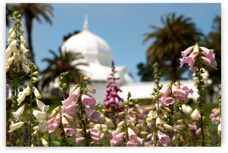 Conservatory of Flowers by Nicole Buzzing Photography