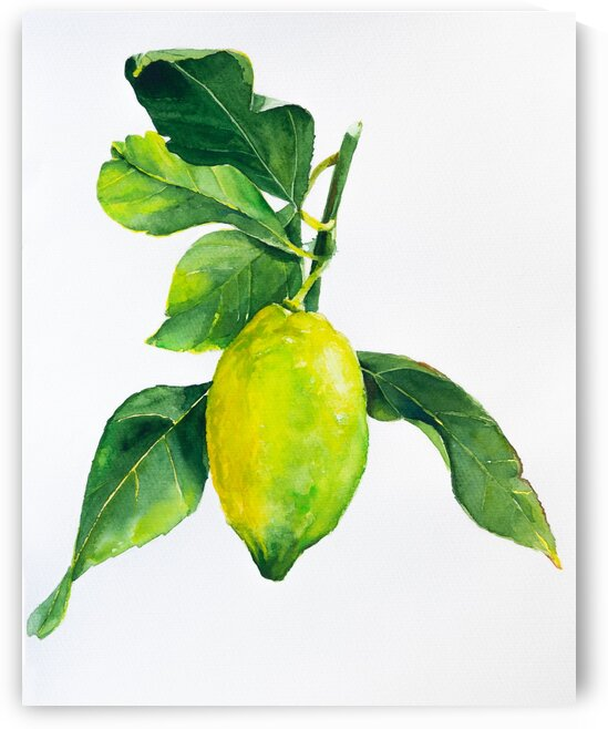 Lemon with leaves watercolor by Aquamarine