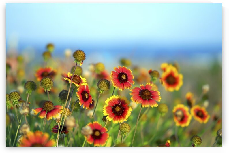 Meadow of flowers with sea backdrop 1 by ParaKrytous