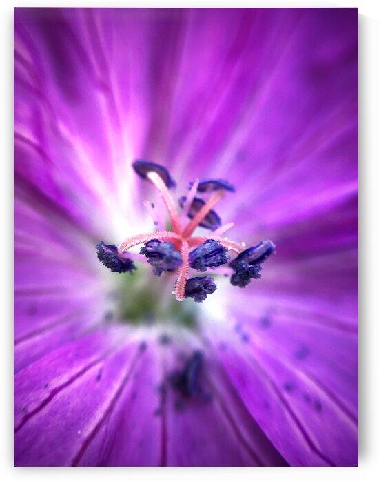 10_Purple Flower Heart - Coeur De Fleur Pourpre_6714 by Emmanuel Behier-Migeon
