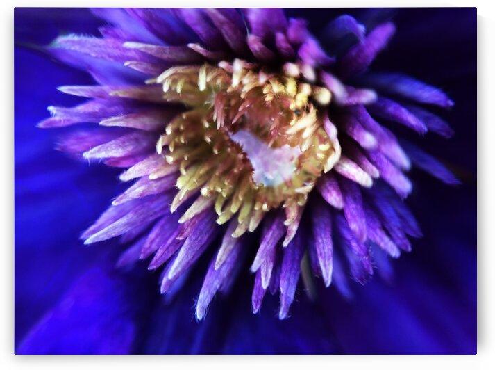 03_Purple Sun - Soleil Pourpre_7295 by Emmanuel Behier-Migeon