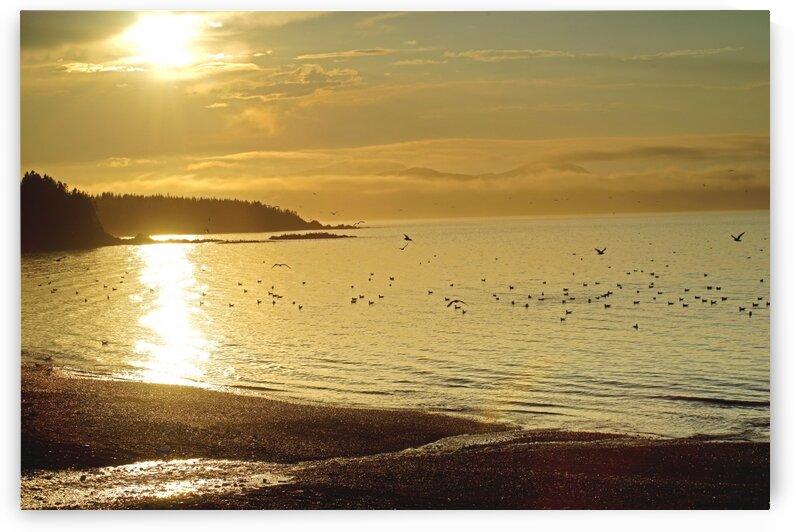 golden beach by David J Tilley